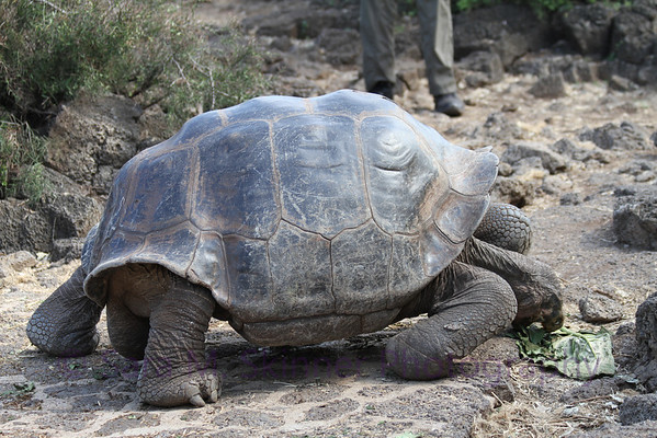 Galapagos (53)