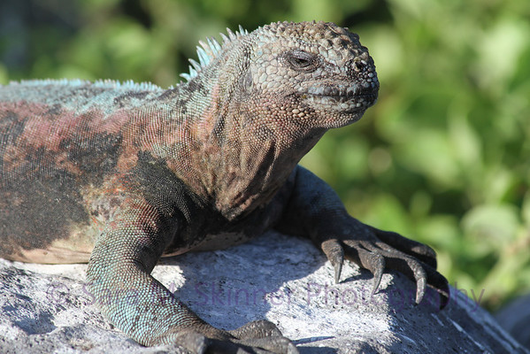 Galapagos (62)