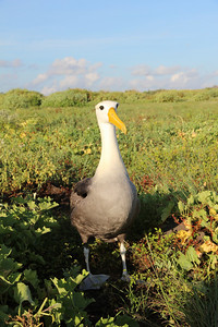 Albatross - what a majestic bird.
