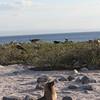 Galapagos (45)