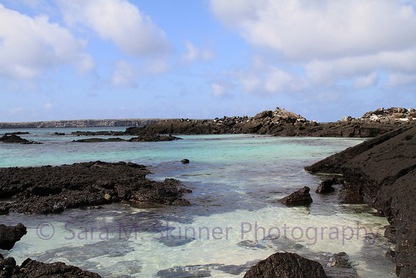 Galapagos (9)