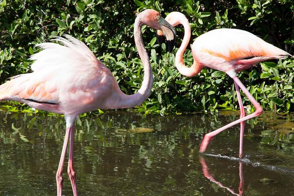 Pink albatrosses.