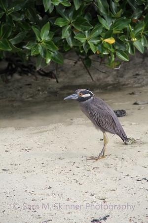 Galapagos (8)