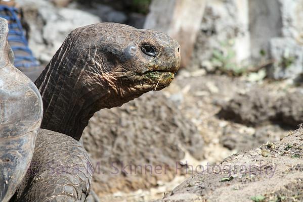Galapagos (51)