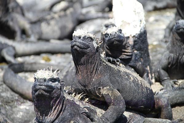 Galapagos (16)
