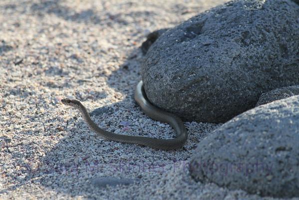 Galapagos (44)