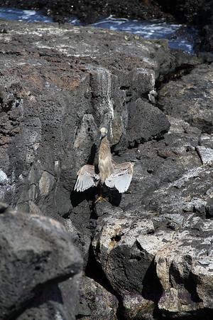 Galapagos (26)