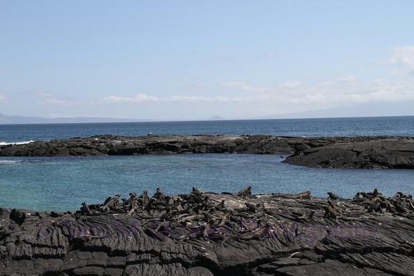 Galapagos (13)