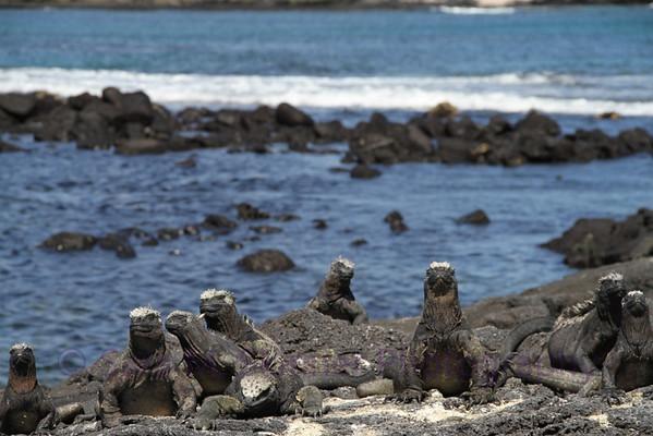 Galapagos (15)