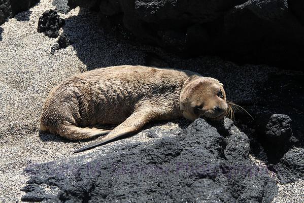Galapagos (17)