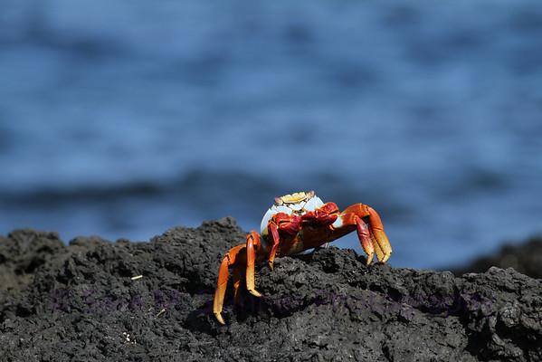 Galapagos (24)