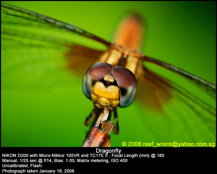 Dragonfly at Eco Lake, Singapore Botanic Gardens, 18 Jan 08.