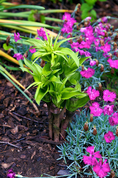 Garden late May 2012  50989