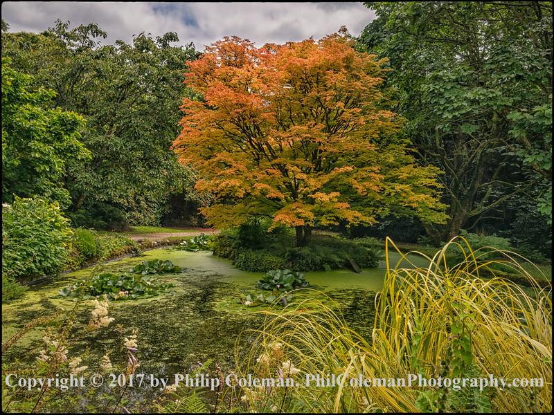 Trewidden Garden, Cornwall, UK