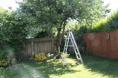 Garden/Planting