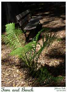 Fern and Bench  Filoli, 28 April 2012