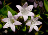 • Flora from around my neighborhood<br /> •
