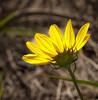 • Flora from around my neighborhood<br /> • Back-lit Sunflower