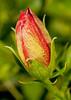 • Flora from around my neighborhood<br /> • Turk's Cap