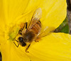 • All these photos were taken on a mile walk around in my neighbor hood.<br /> • Honey Bee
