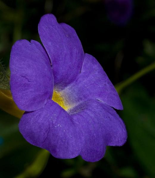 Bok Tower Gardens - Flowers in varios gardens