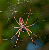 • Flamingo Gardens<br /> • Golden Silk Spider