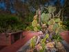 Flora around the Courtyard Gazebo