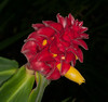 • Location - Leu Gardens<br /> • Bromeliad Hybrid