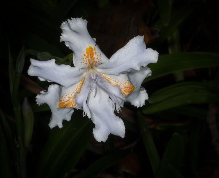 Location - Harry P. Leu Gardens - Orlando