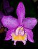 McKee Botanical Garden - Orchid
