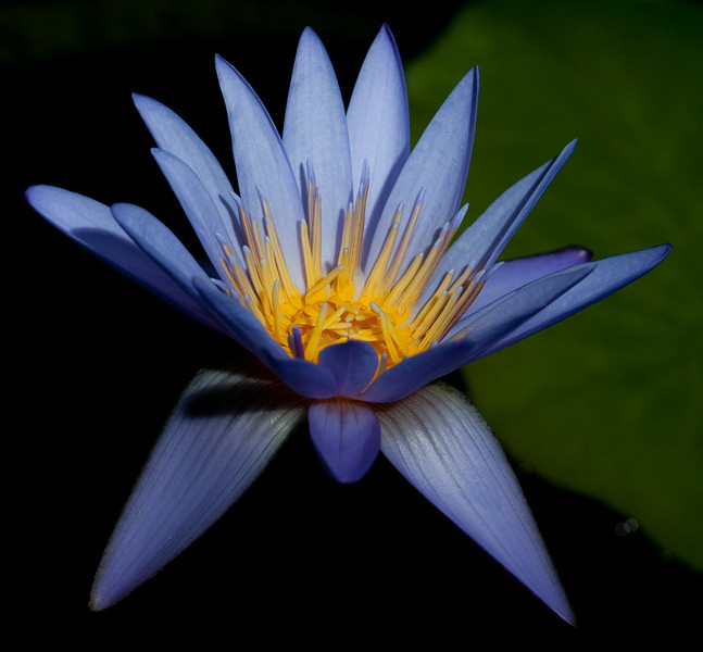 Water Lily taken at McKee Botanical Gardens in Vero Beach Florida - Terri Dunn