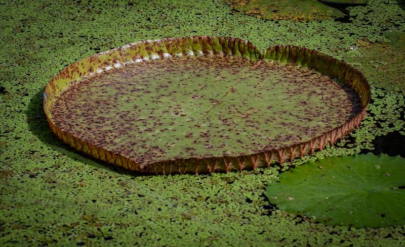 Location - McKee Botanical Garden