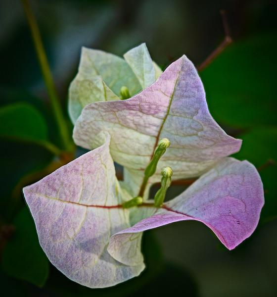 Location -  Rock City Gardens - Wabasso, FL