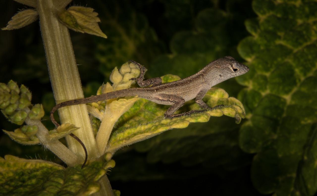 • Location - Rockledge Gardens<br /> • It looks like baby Gecko