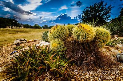 Cactus Storms