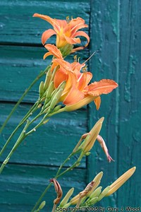 Lilies and Garage