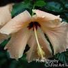 Haupt Garden 09 copy