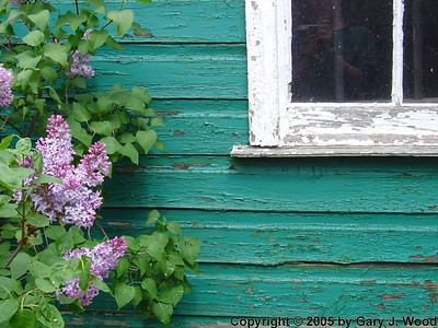 Lilacs And Old Paint