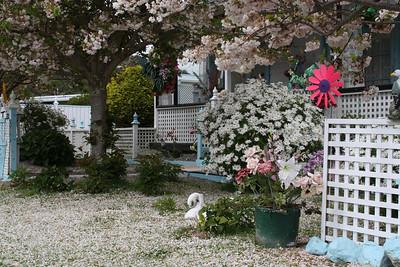Spring in Waikanae, New Zealand