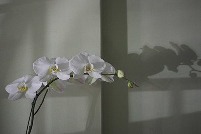 An Orchid at the End of the Day
