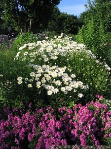 Flower garden beside Mimico Marina