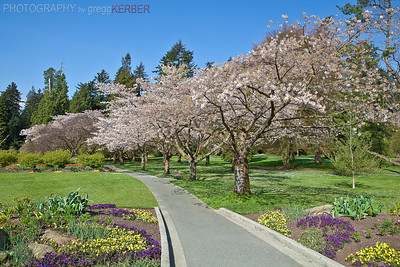 Rose Garden, Stanley Park, Vancouver, BC