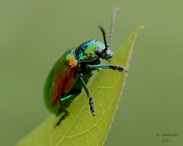Interesting Insects 2009-2014