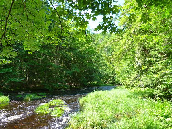 Gaspereau River Natural History