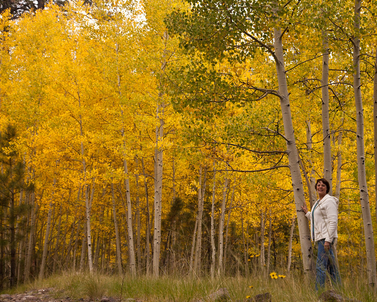 Changing aspen leaves in the inner basin of the San Francisco Peaks in Flagstaff, AZ, early October, 2012