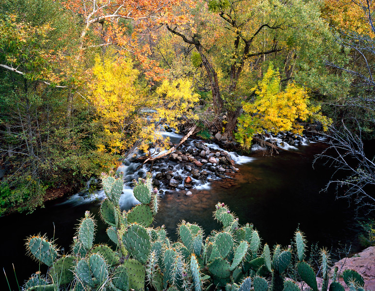 Water flowing in to Oak Creek, at Grasshopper Point.  I liked the contrast between the soft water and leaves, and the sharp, dry cactus.  A couple hundred yards down stream is a great swimming hole for swimming and diving.