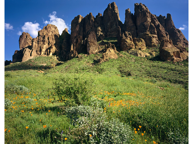 Poppies, Lupines, and lots of grass in the Superstition Mountains