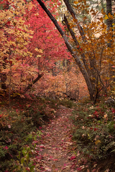 A very inviting pathway in the West Fork of Oak Creek Canyon.  The colors were brilliant, the temperature was on the cool side of comfortable and the fragrance was great.