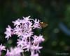A butterfly on purple flowers seen on a Sunday morning walk