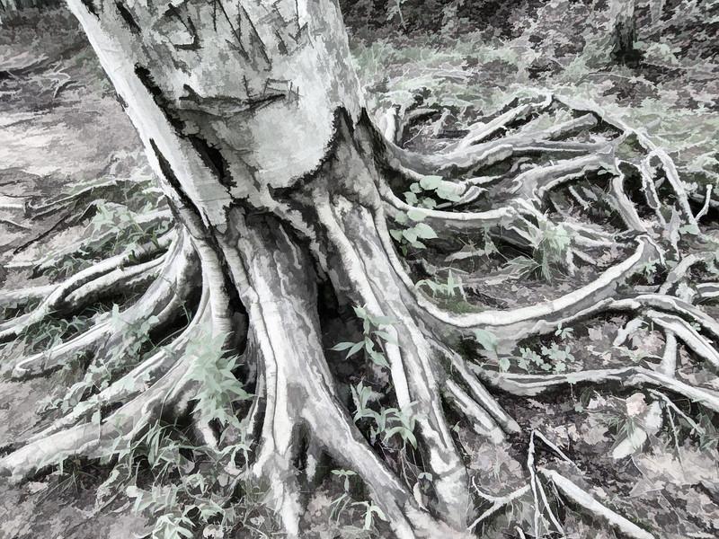 00aFavorite 20130604 (1529) - Tree roots, Cox's Mntn Trail, Eno River Park, Orange County NC [Topaz Simplify]